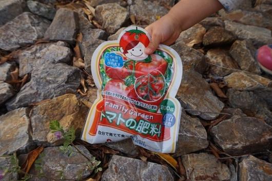 ベランダでの家庭菜園のミニトマト資料