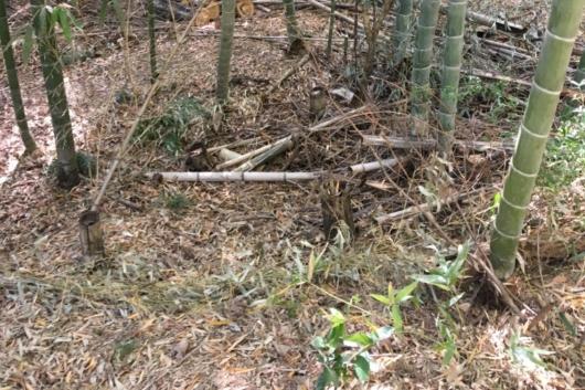 牧野ヶ池緑地たけのこ掘り場所