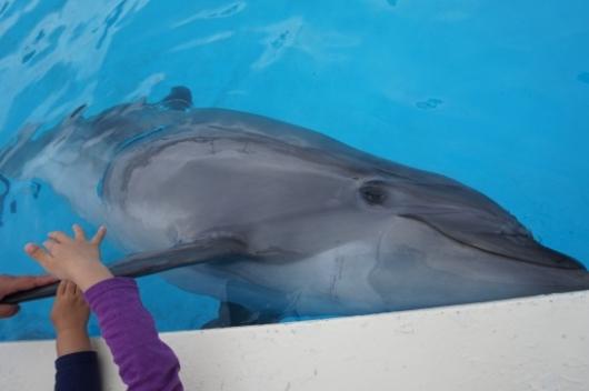 南知多ビーチランドのイルカ