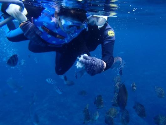 幼児(5歳と2歳)を連れた沖縄旅行。青の洞窟シュノーケリングツアー『ナチュラルブルー』の餌やり