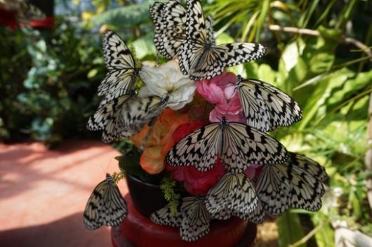 幼児(5歳と2歳)を連れた沖縄旅行の琉宮城蝶々園