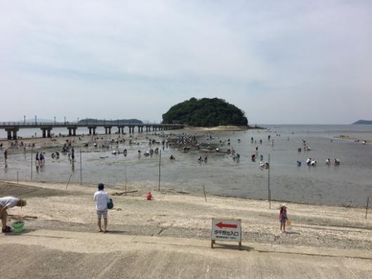 竹島海岸潮干狩りの様子
