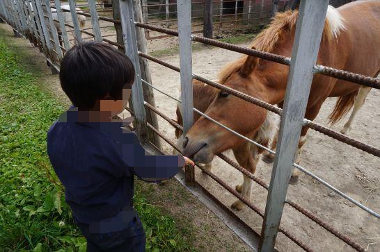 ハイジ牧場の馬への餌やり