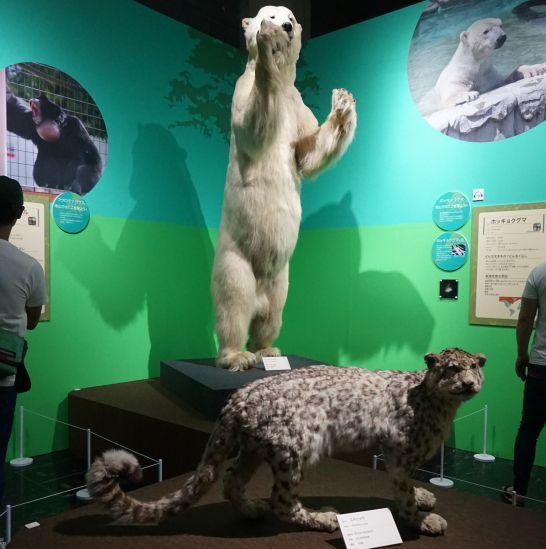 名古屋市科学館の特別展『絶滅動物研究所』の絶滅危惧種の紹介