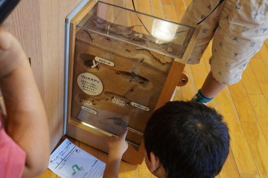 モリコロパークのもりの学舎の2階のアリの巣