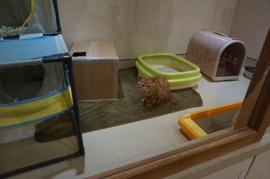 岡崎市動物総合センターのねこの家族募集