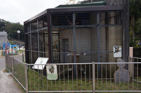 岡崎市東公園動物園のルリコンゴウインコ
