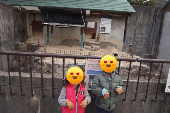 岡崎市東公園動物園のミーアキャット