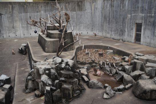 岡崎市東公園動物園の猿