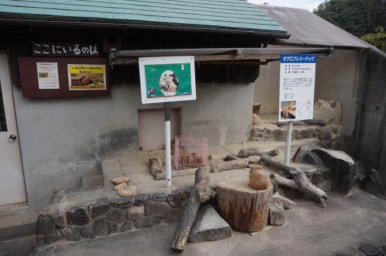 岡崎市東公園動物園のオグロプレーリードッグ