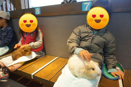 岡崎市東公園動物園の動物ふれあい舎
