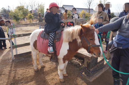 ぎふ清流里山公園のポニーの乗馬体験