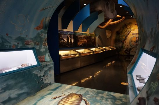 橿原市昆虫館の標本展示室1