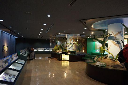 橿原市昆虫館の標本展示室2