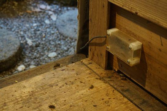 橿原市昆虫館の生態展示室(光庭コーナー)