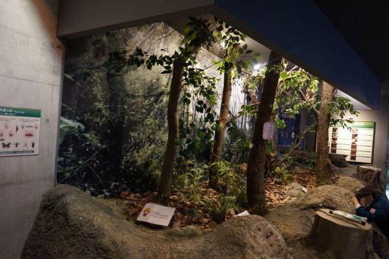 橿原市昆虫館の生態展示室(ジオラマ)