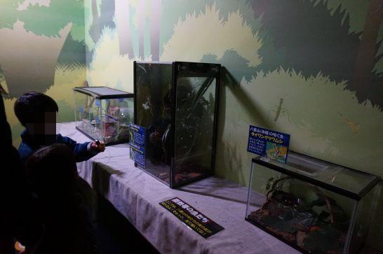 橿原市昆虫館の亜熱帯の虫たち