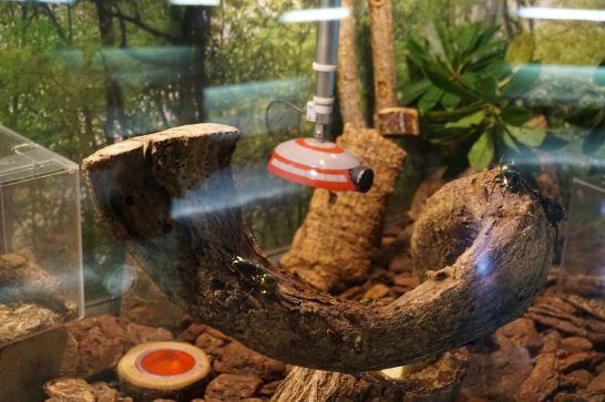 橿原市昆虫館のミクロ探検隊