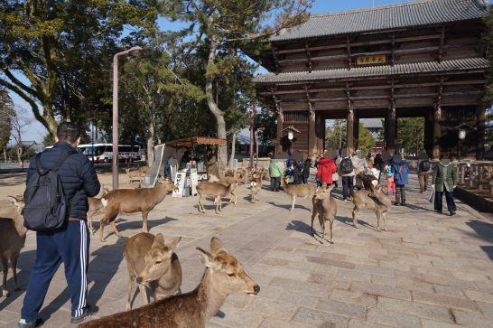 東大寺南大門前の鹿せんべいのお店と鹿