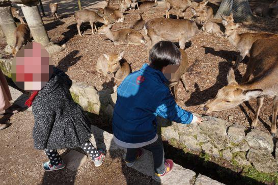 鹿との触れ合い、鹿せんべいをあげる