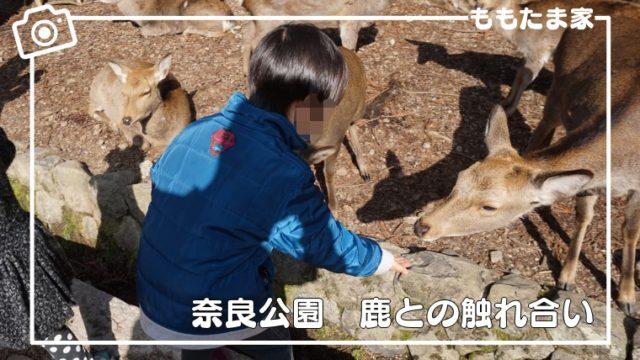 奈良公園(東大寺、鹿せんべい)を幼児と一緒に楽しむ方法、おすすめ散策ルートも紹介