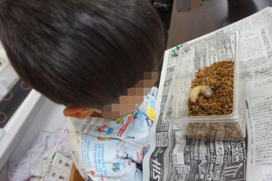 カブトムシの幼虫に対する子供達の様子
