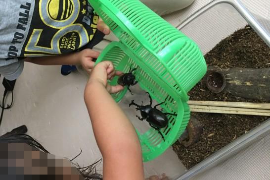 カブトムシの成虫を育てるのに準備するもの